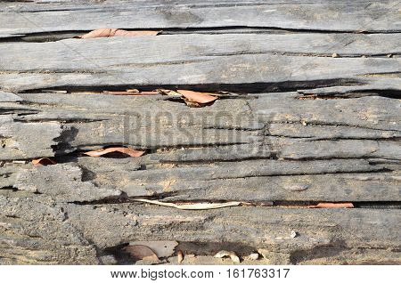 Texture of old wood - close up