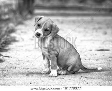 picture of a cute mixed breed puppydomestic animals theme,bw filers added