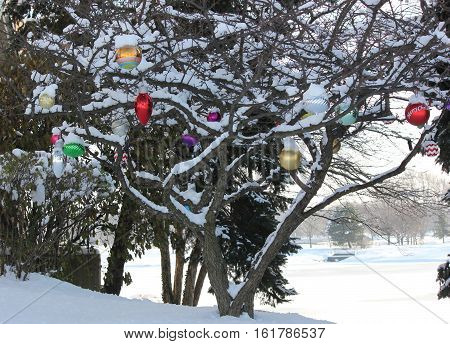 Holiday decorations add festive flair to a snow covered tree in suburbia