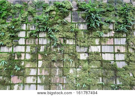 green moss on damp pld concrete wall