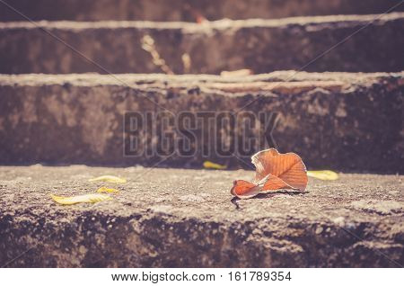 Copy Space Of Dried Leaf Fall On Stone Stair Abstract Background.