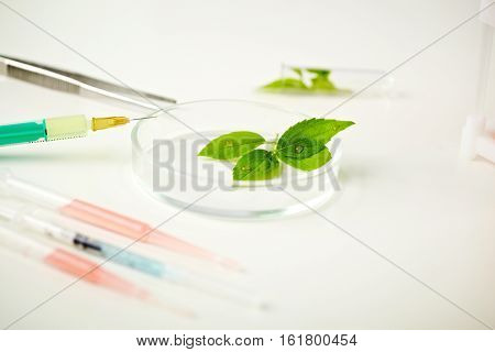 Close-up of green plant in tray on lab table