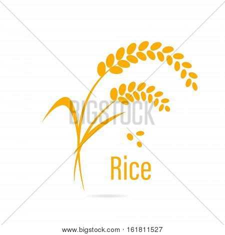 Cereal icon with rice. Vector illustration isolated on white background.