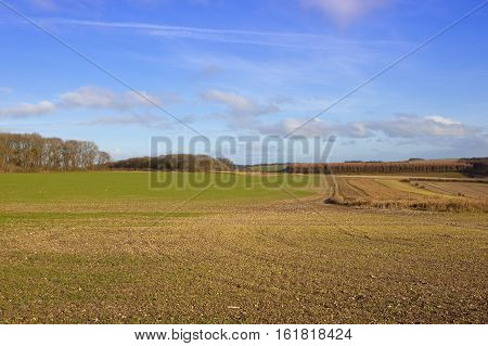 Farming Countryside