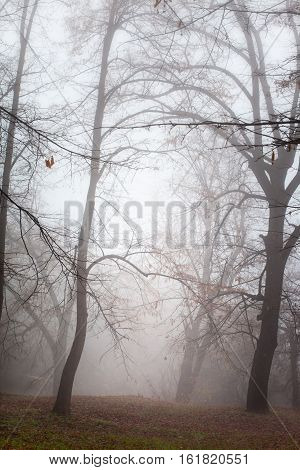 Misty bare forest after cold autumn rain, vertical