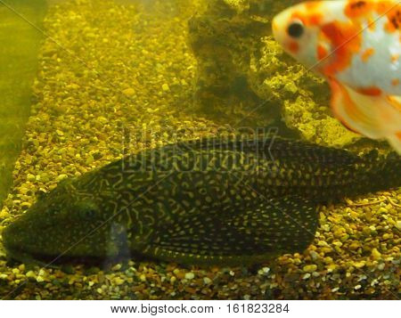 Motley small fishes swim in an aquarium among stones