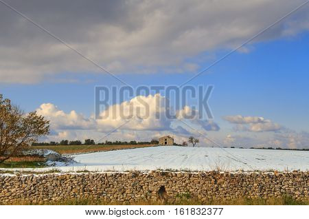 Rural landscape winter: farmhouse with tree in a snowy field. Italy, Apulia.