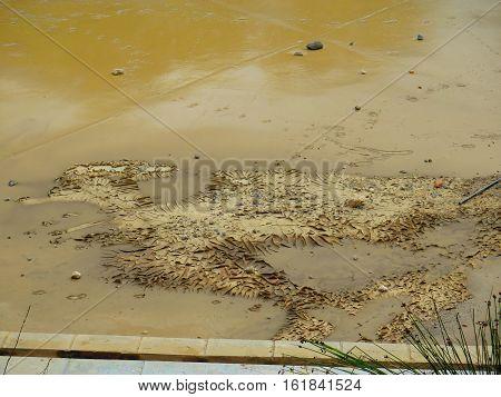 Mud Roadrunner Bird