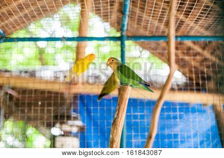 Tropical birds in the Philippines, tropical birds concept