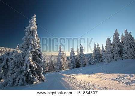 Winter landscape at dawn. Snow covered trees on a mountain slope.