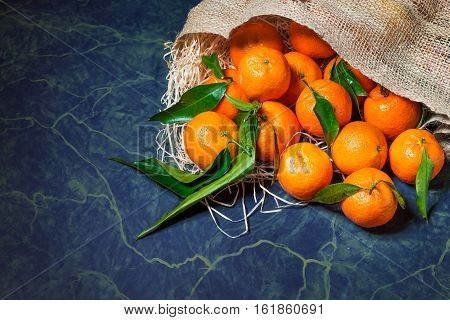 Fresh picked mandarins spilling from a burlap sack. Horizontal format with copy space.