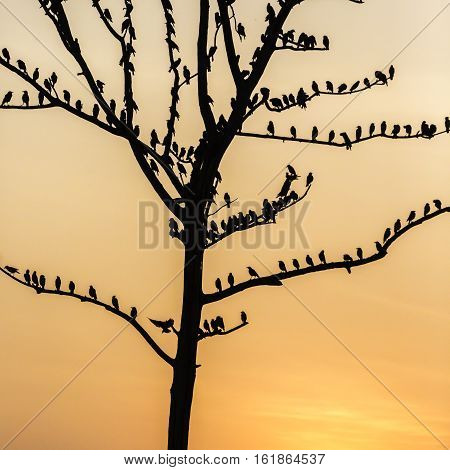 Big Tree With Birds Silhouette Sunrise Red Sky Background At Udawalawe National Park, Sir Lanka.