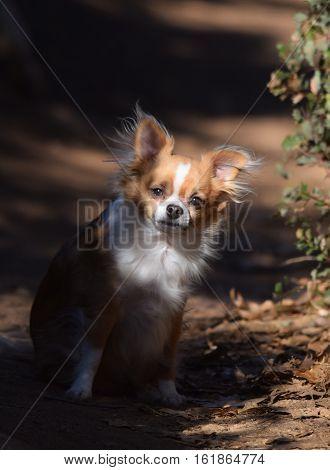 a dog looks curiously down a trail