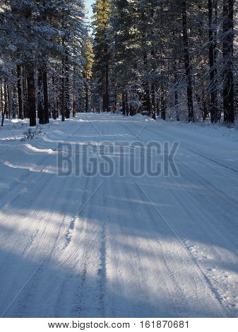 A snow covered road through a forest of ponderosa pine trees near Camp Sherman in Central Oregon on a winter day
