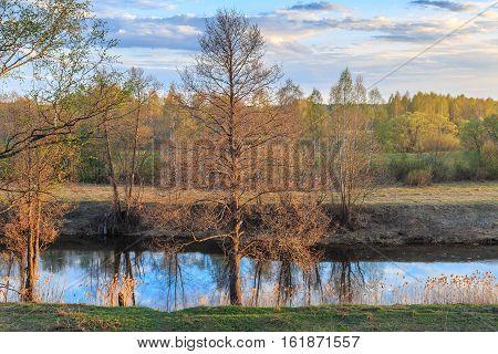 Spring Evening, Alder Riverside Reeds