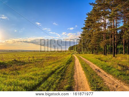Spring Landscape, The Road Between The Pine Forest