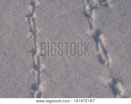 Traces of unprecedented animals on friable new-fallen snow
