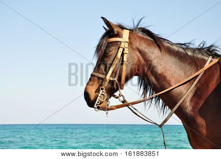 Horse against the backdrop of the sea.