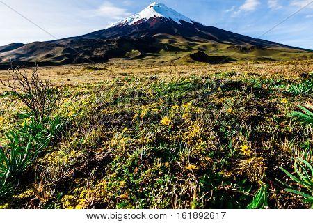 Spring vegetation in the highlands of Cotopaxi