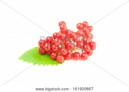 Red berries of a guelder-rose isolated on a white background cutout