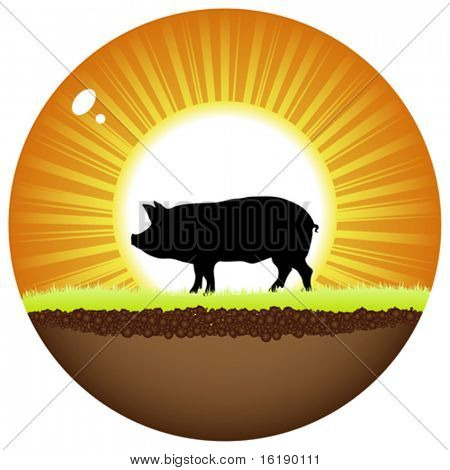 sunshine ball with pig