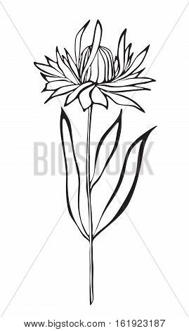 White and black outline of a flower on white background. Vector isolated.