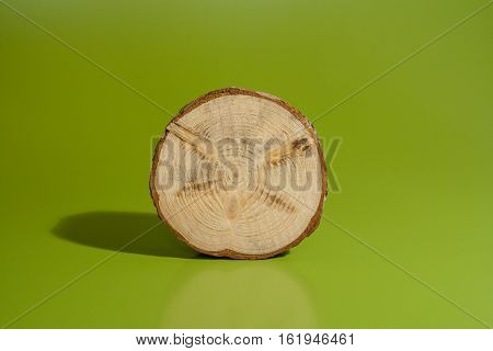 One small pine saw cut with bark is standing on rib on green background.