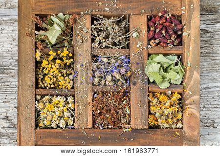 Dried medicinal plant in an old wooden box (chamomile tansy linden St. John's wort cornflower mullein calendula currant leaves rosehip). Used for preparation of healthy drinks decoctions