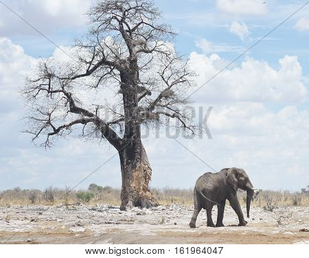 an image of an elephant in Africa