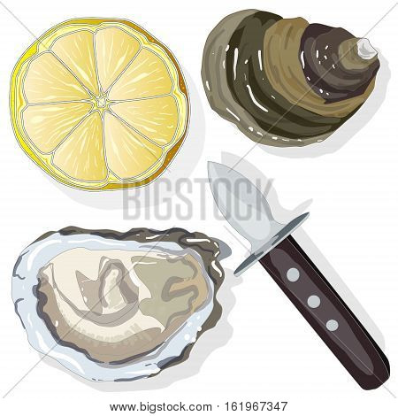Shucked Oysters with lemon on whight background