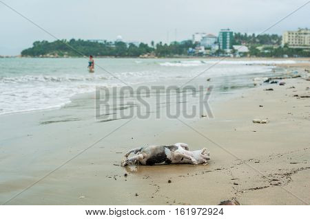 Drowned dead dog after the storm washed ashore