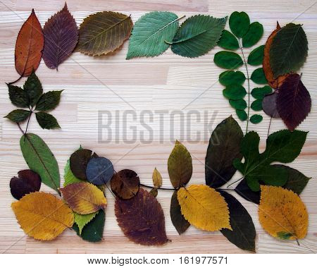Pressed and dried leaves (herbarium) form the frame on the background of wooden board