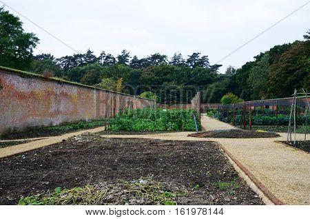 Vegetable plot in English walled estate garden