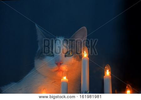 Cat looking through the window on Christmas and sitting next to candle ornaments.