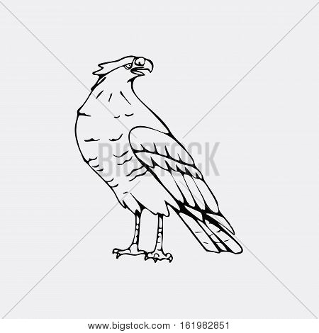 Hand-drawn pencil graphics, vulture, eagle, osprey, falcon, hawk, scavenger, condor, karkar, kite. Engraving, stencil style. Bird predator. Black and white logo, sign, emblem, symbol. Stamp, seal. Simple illustration. Sketch.