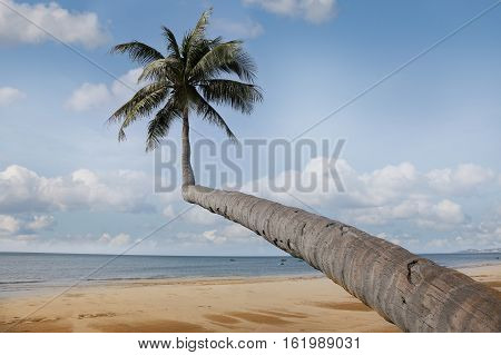 Alone coconut palm tree on the beach on the background of blue sky. Mui Ne Vietnam