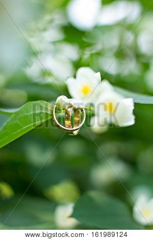 two wedding rings hang on a branch on park