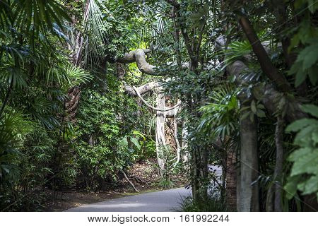 TOKYO, JAPAN - OCTOBER 12, 2016: Detail from Ueno zoo in Tokyo Japan. It is Japan oldest zoo opened on March 20 1882
