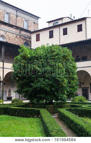 Orange Tree In Yard Of Basilica Di San Lorenzo