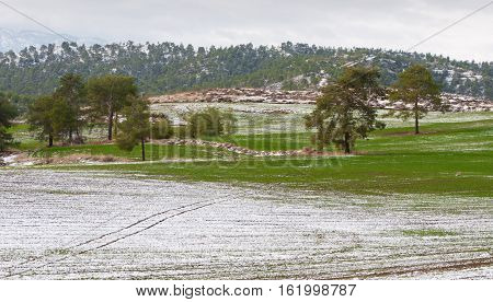 Winter landscape with snow on the fields