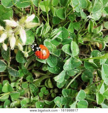 doğada bulunan yakın çekim uğur böceği görseli