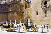 carriages in front of Cathedral of Seville, Andalusia, Spain poster