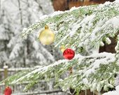 Branches of dressed Christmas tree in tranquil winter forest. Close up. Christmas outdoor background. poster