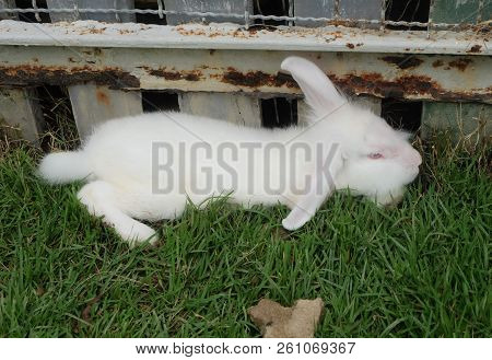 Rabbit Thai, Rabbit Male Sex, Pets In Thailand.