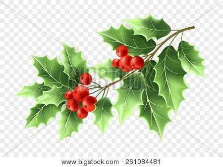 Christmas Holly Tree Branch Realistic Illustration. Xmas Decorative Plant. Green Holly Twig With Lea