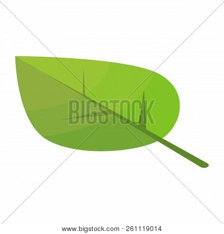 Poplar Tree Leaf Icon. Isometric Of Poplar Tree Leaf Vector Icon For Web Design Isolated On White Ba
