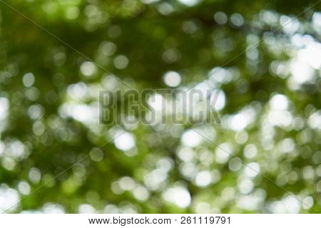 Bokeh Of Light From Leaves Of Tree In Garden
