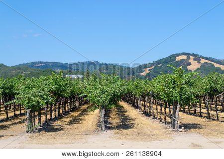 Vineyards At Sonoma Valley