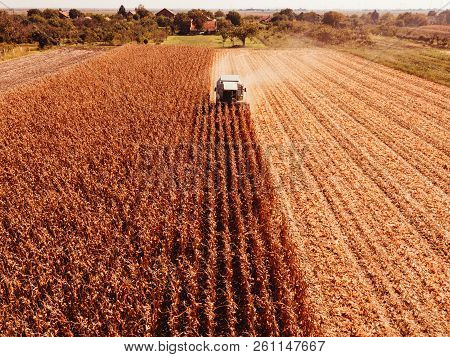 Aerial Photography Of Combine Harvester Harvesting Corn Crop Field From Drone Point Of View