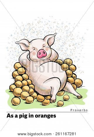 A Series Of Postcards With A Piglet. Proverbs And Sayings. As A Pig In Oranges. A Fat Pig Lies Among